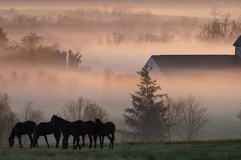 foggy horse farm
