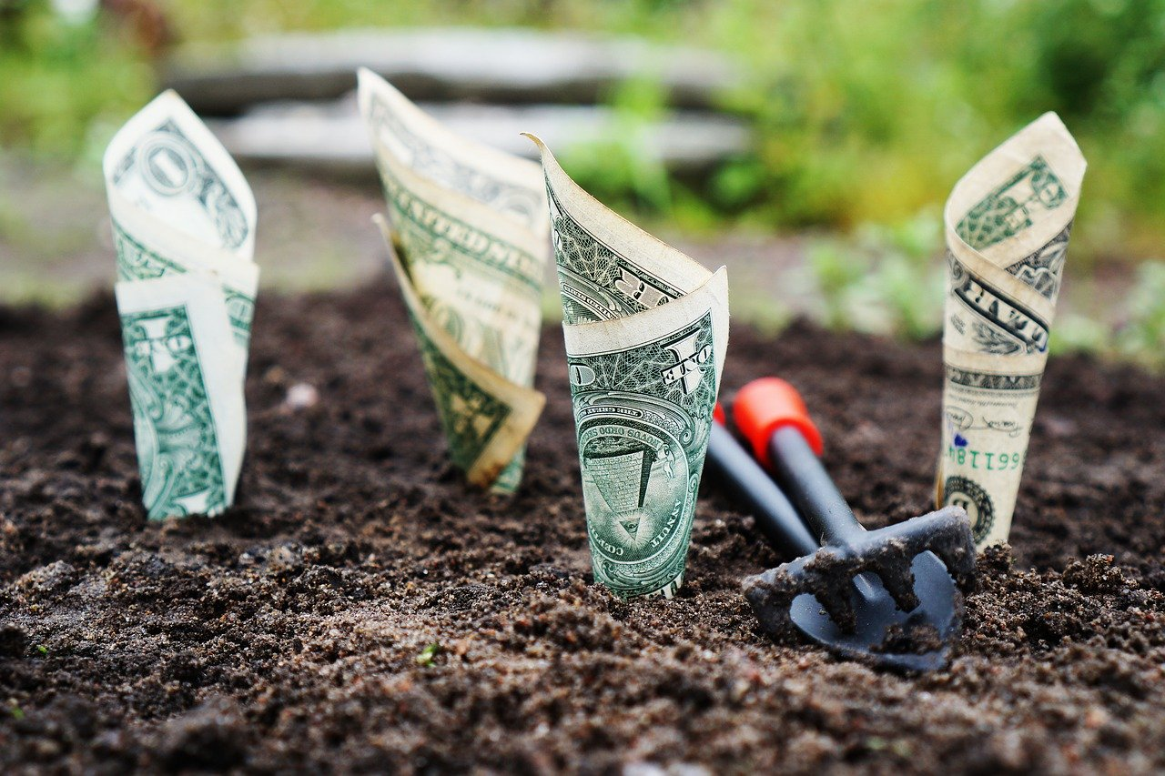 money planted in soil